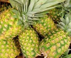 Ananas - kliknutím zobrazíte obrázek v plné velikosti