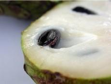Anona cherimoya - kliknutím zobrazíte obrázek v plné velikosti