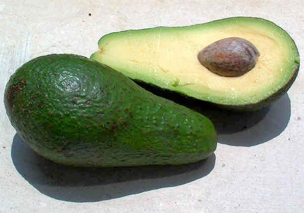 Plod avokáda