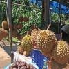 Durian - kliknutím zobrazíte obrázek v plné velikosti