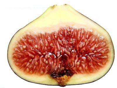 Řez plodem fíkovníku