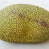 Jackfruit - kliknutím zobrazíte obrázek v plné velikosti