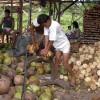 15-kokosovy-orech.jpg - kliknutím zobrazíte obrázek v plné velikosti