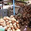 28-kokosovy-orech.jpg - kliknutím zobrazíte obrázek v plné velikosti