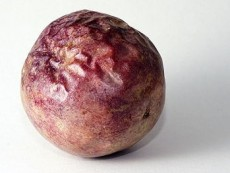 Passiflora Edulis - zralé ovoce - kliknutím zobrazíte obrázek v plné velikosti