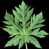 List rostliny - kliknutím zobrazíte obrázek v plné velikosti