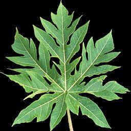 List rostliny