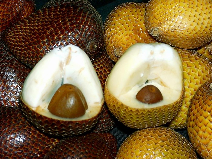 Salak (hadí ovoce)