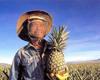 Na ananasové farmě