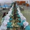 Třídění datlí v Iránské fabrice - kliknutím zobrazíte obrázek v plné velikosti