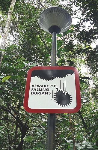 Pozor, padající duriany