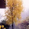 Marhaník granátový na podzim - kliknutím zobrazíte obrázek v plné velikosti
