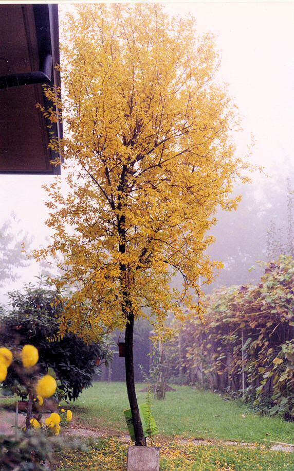 Marhaník granátový na podzim