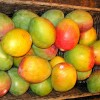 Mango - kliknutím zobrazíte obrázek v plné velikosti