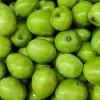 Zelené mango - kliknutím zobrazíte obrázek v plné velikosti