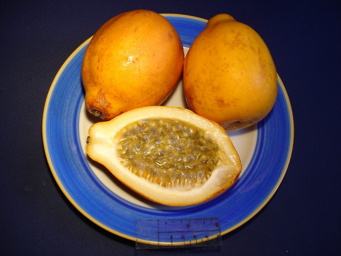 Passiflora alata - plod