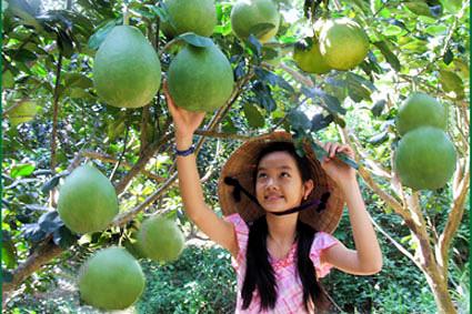Čínská dívka s pomelem