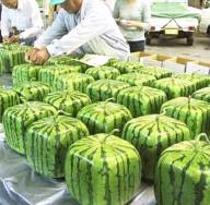 Hranatý meloun - kliknutím zobrazíte obrázek v plné velikosti