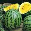 Žlutý vodní meloun - kliknutím zobrazíte obrázek v plné velikosti