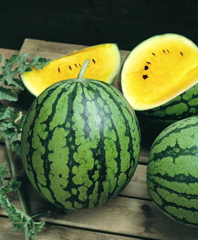 Žlutý vodní meloun