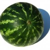 Hranatý voní meloun - kliknutím zobrazíte obrázek v plné velikosti