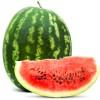 Vodní meloun - kliknutím zobrazíte obrázek v plné velikosti